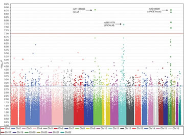 genome-wide association analysis